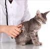 Ветеринарные клиники в Нижней Туре